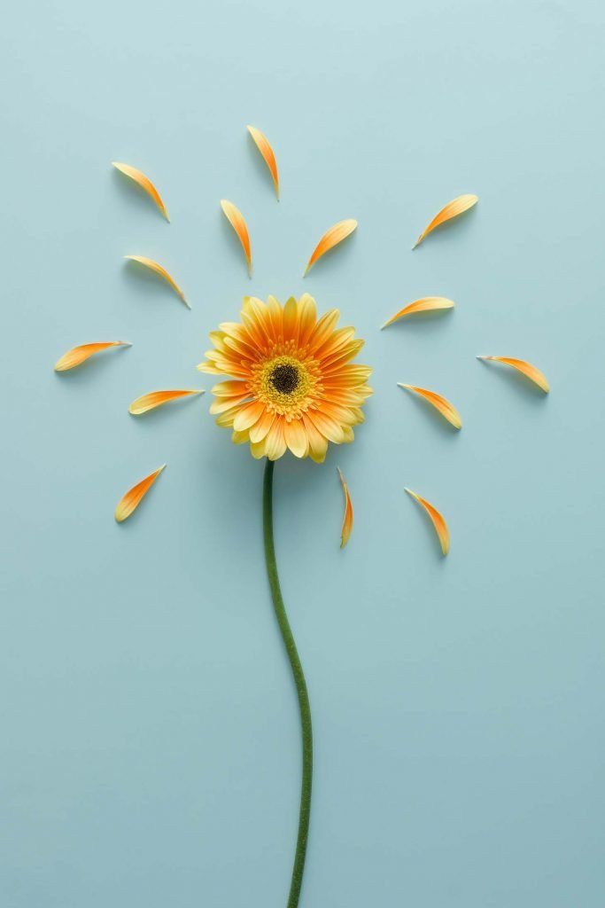 yellow flower with petals detached