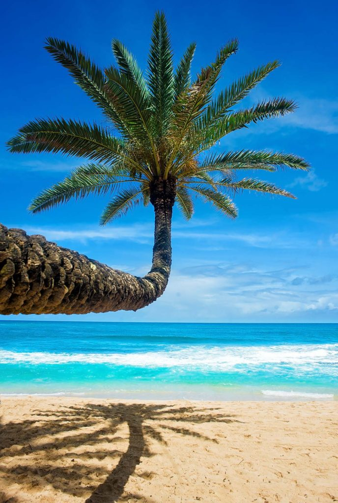 HodgeonRepeat blog - view of ocean with palm tree