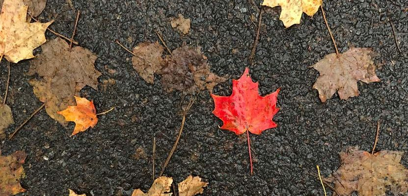 HodgeonRepeat - Transition to fall journal prompts - wet leaves on ground